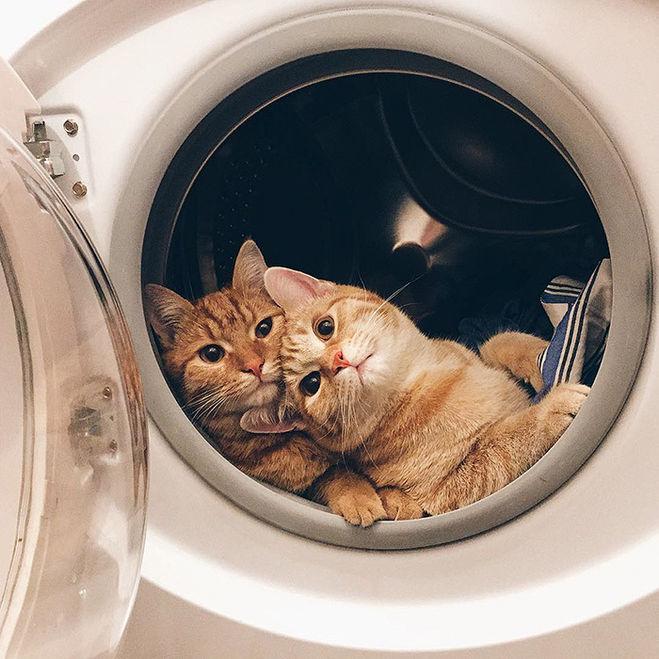 Как ухаживать за стиральной машиной?